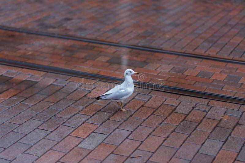 Чайка в городе стоковая фотография