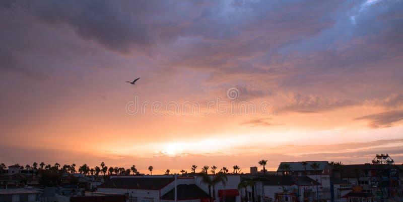 Чайка в заходе солнца над гаванью пляжа Ньюпорта в южной Калифорнии США стоковые фото