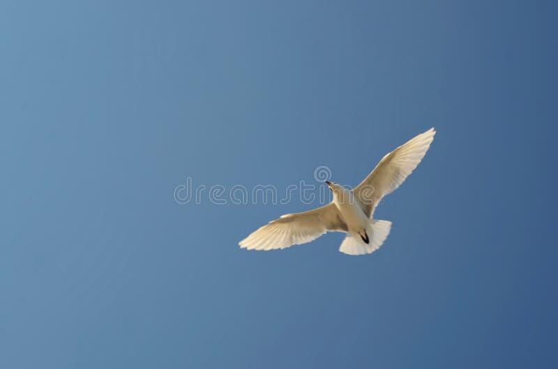 Чайка в небе стоковое фото