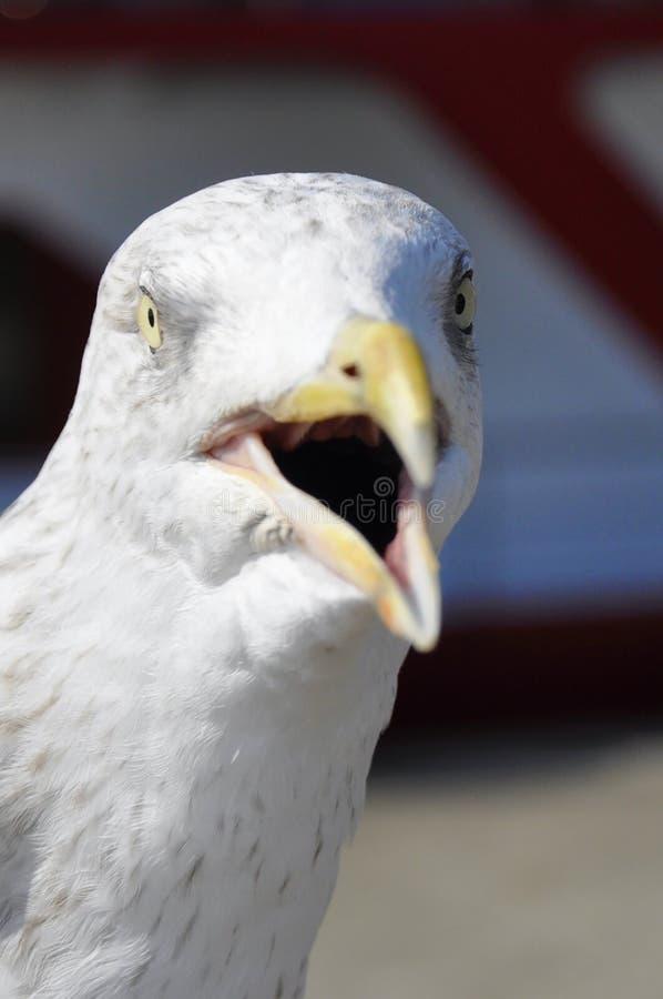 Чайка в порте стоковое фото rf