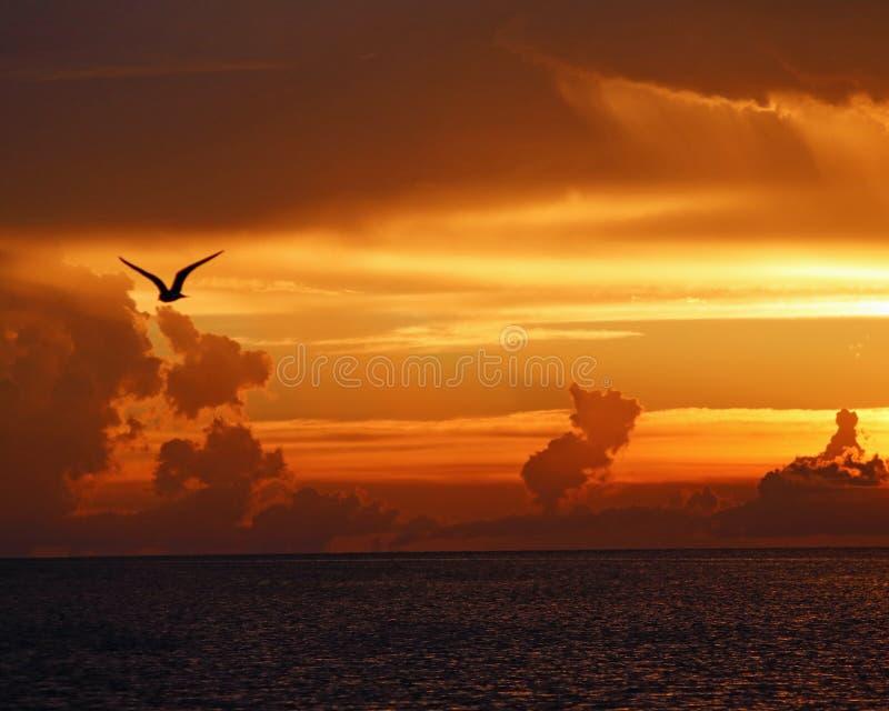Чайка в силуэте против захода солнца стоковые фотографии rf