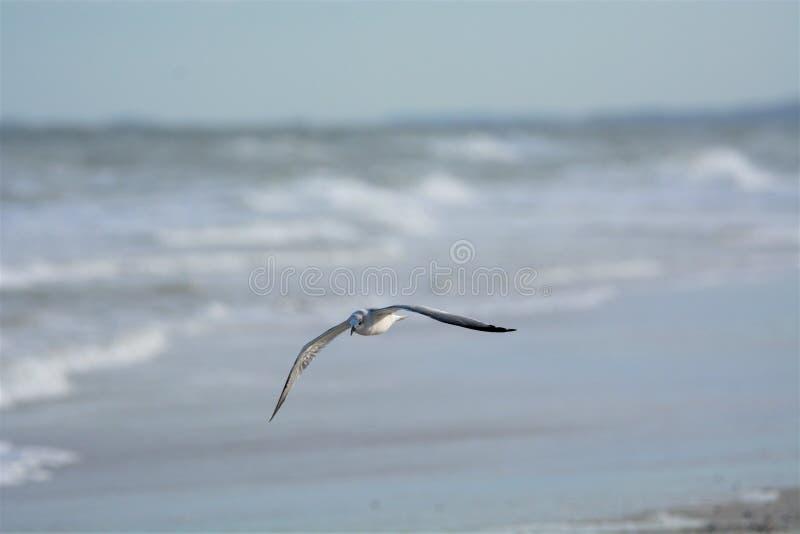 Чайка делает свой путь над солнечным бечевником с видом на море и острова стоковое изображение