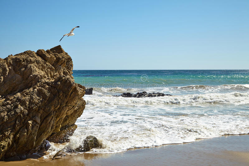 Чайка летая над скалой стоковые изображения rf