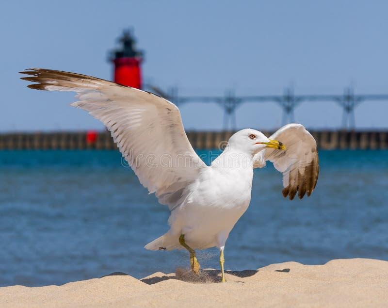 Чайка и маяк flapping стоковая фотография rf