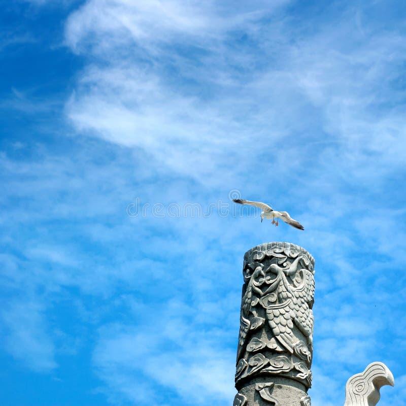 чайка колонок стоковые фотографии rf