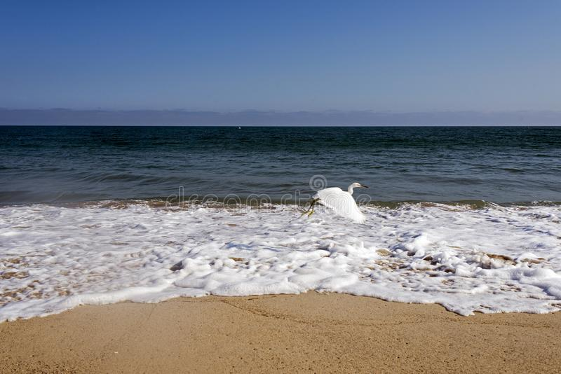 Чайка летания над волнами в океане в Malibu, Лос-Анджелесе, США В ЛЕТНЕМ ВРЕМЕНИ стоковая фотография