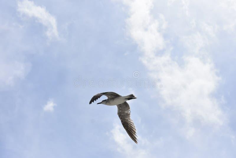 Чайка летания пляжа стоковые фото