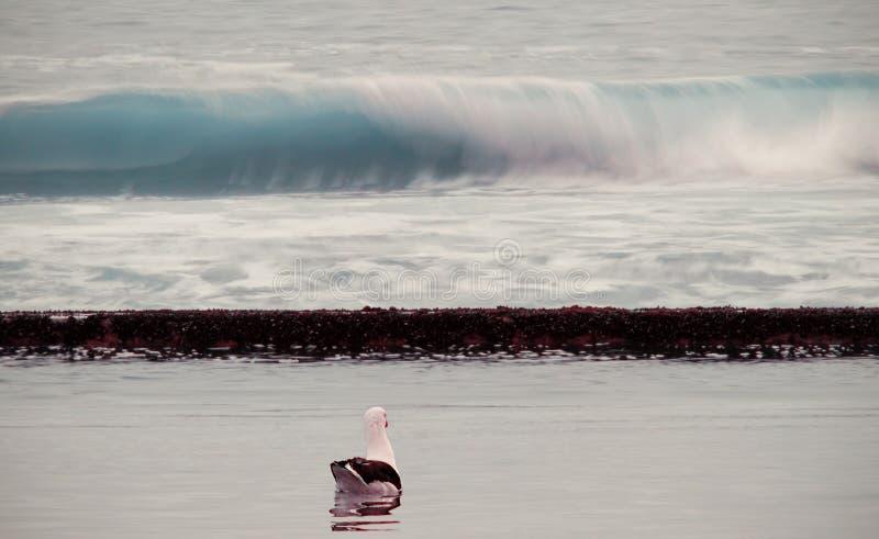 Чайка моря на пляже стоковое фото rf