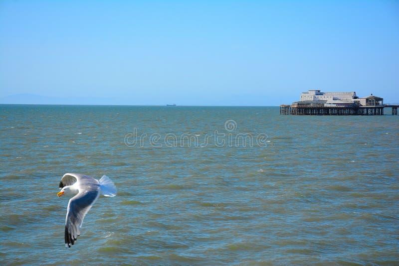 Чайка над морем и на задней части здания на пристани стоковые изображения