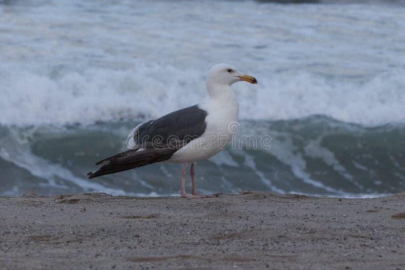 Чайка на береге стоковое изображение