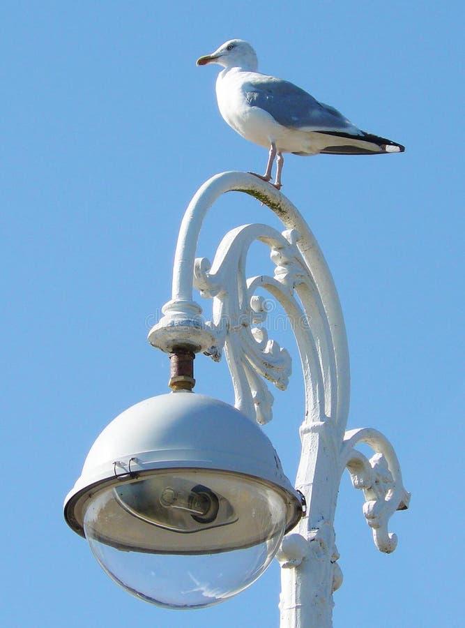 Чайка на богато украшенном уличном свете стоковые фотографии rf