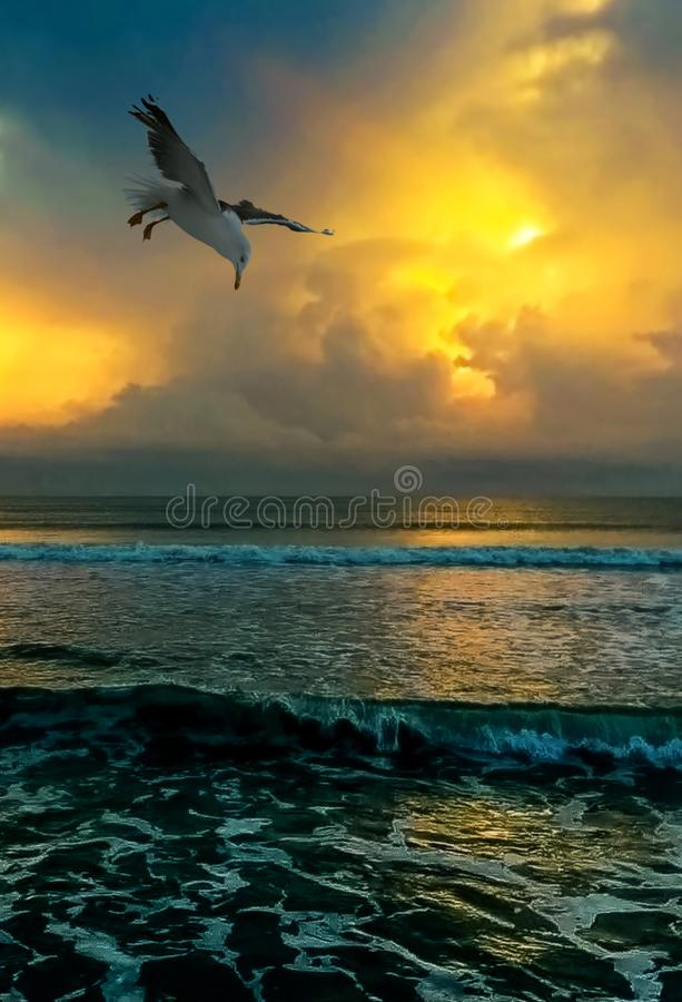 Чайка на восходе солнца утра стоковые изображения rf