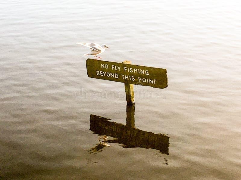 Чайка на знаке рыбной ловли стоковые фото