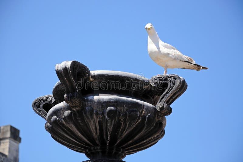 Чайка на каменной скульптуре стоковые фото