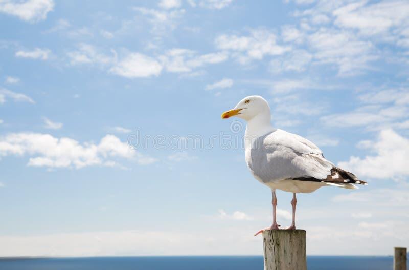 Чайка над морем и голубым небом стоковые изображения