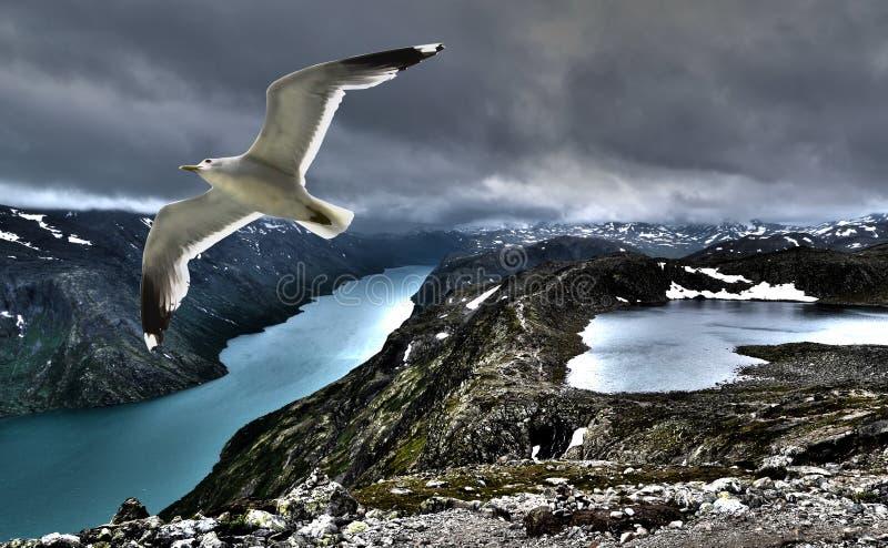 Чайка над морем стоковое фото