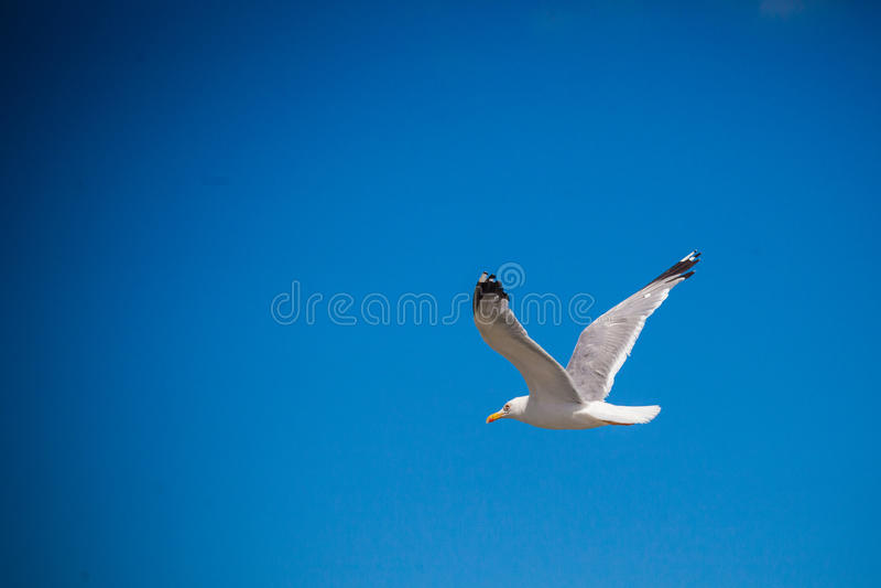 Чайка на небе стоковое фото rf