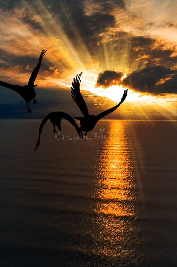 Чайка на океане захода солнца стоковые фото