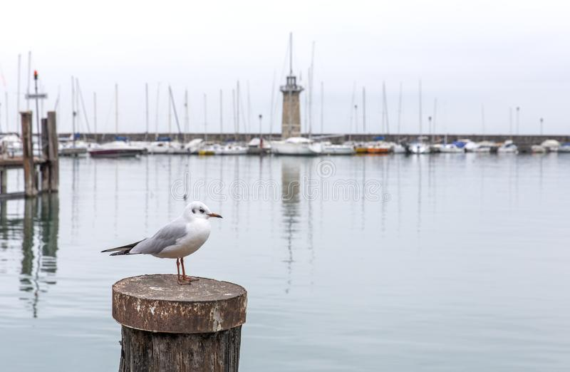 Чайка на предпосылке маяка озера Garda, Desenzano di Garda, Италии Маяк Seascape на горизонте с a стоковые фотографии rf