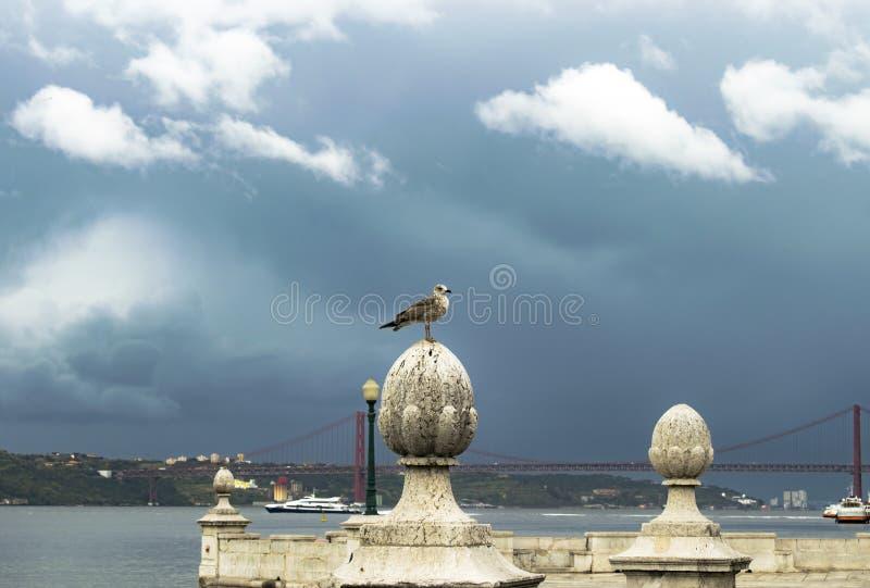 Чайка на реке стоковые фотографии rf