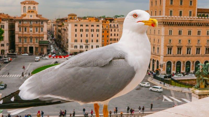 Download Чайка на стене национального монумента в Риме Стоковое Фото - изображение насчитывающей туристы, туризм: 81808734