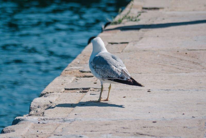 Чайка на стойках портового района на краю пристани стоковые изображения