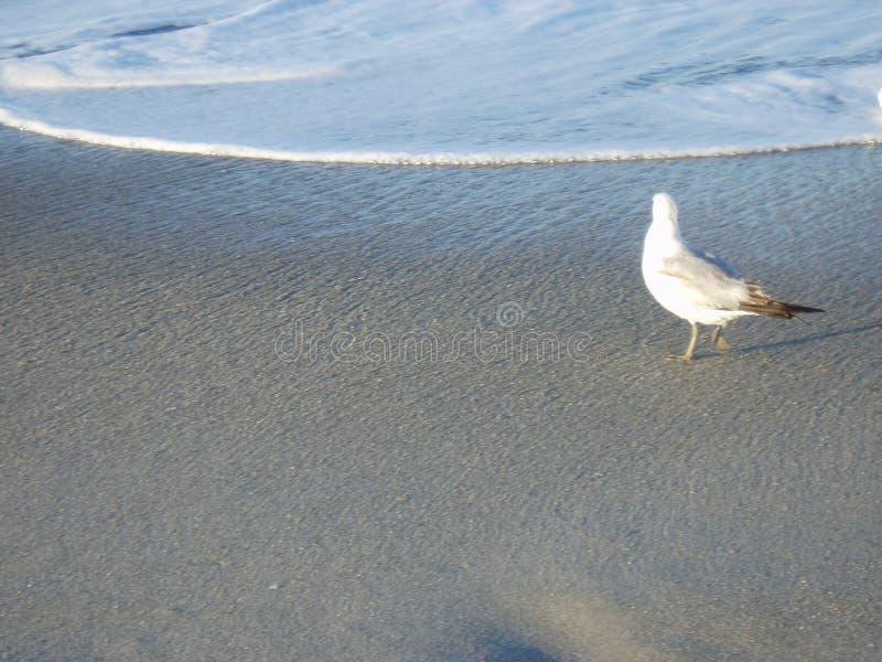 чайка одинокая Стоковая Фотография