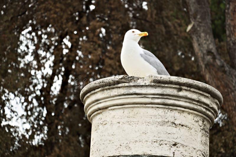 Чайка отдыхает на мраморном столбце Предпосылка fronds дерева стоковое фото rf