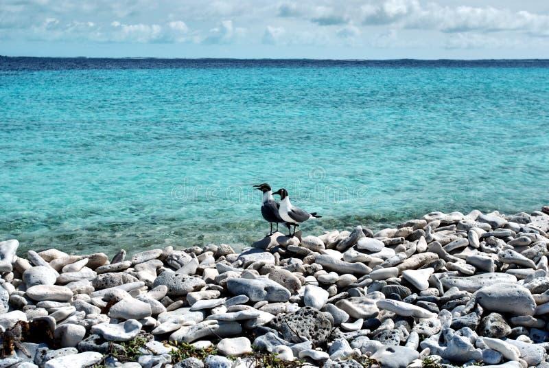 чайка пляжа стоковое фото