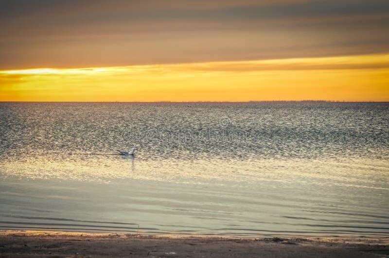 Чайка плавая в море, красивое небо, заход солнца на море стоковая фотография