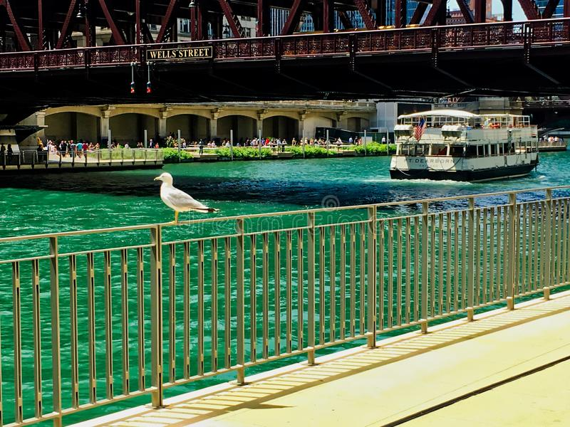 Чайка садилась на насест на перилах вдоль Рекы Чикаго по мере того как туристы и locals наслаждаются неторопливым летним днем стоковое изображение
