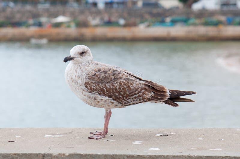 Download Чайка садить на насест на порте Стоковое Изображение - изображение насчитывающей село, бело: 40584879