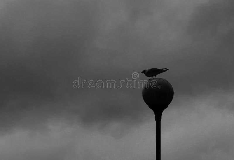 Чайка сидит на уличном фонаре стоковые изображения