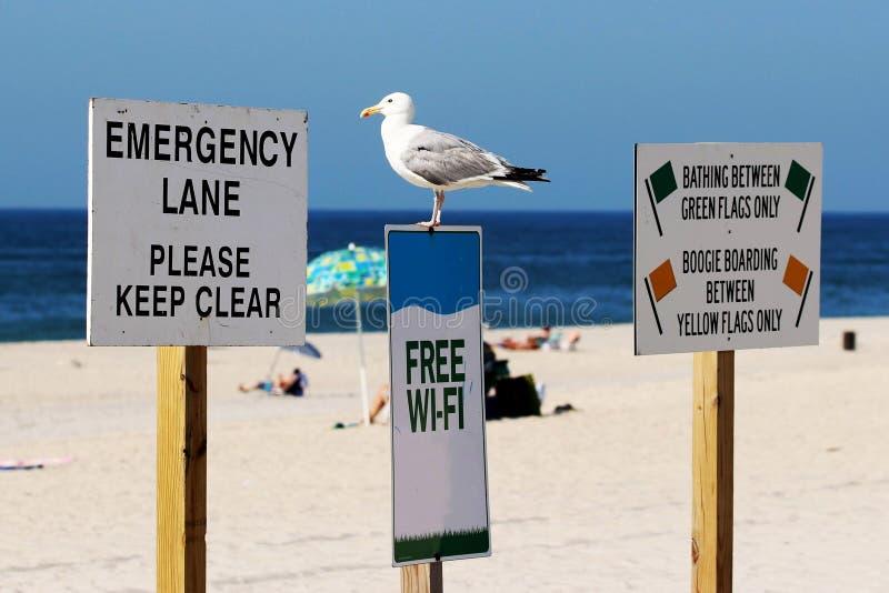 Чайка стоя на свободном знаке Wi-Fi стоковое фото rf