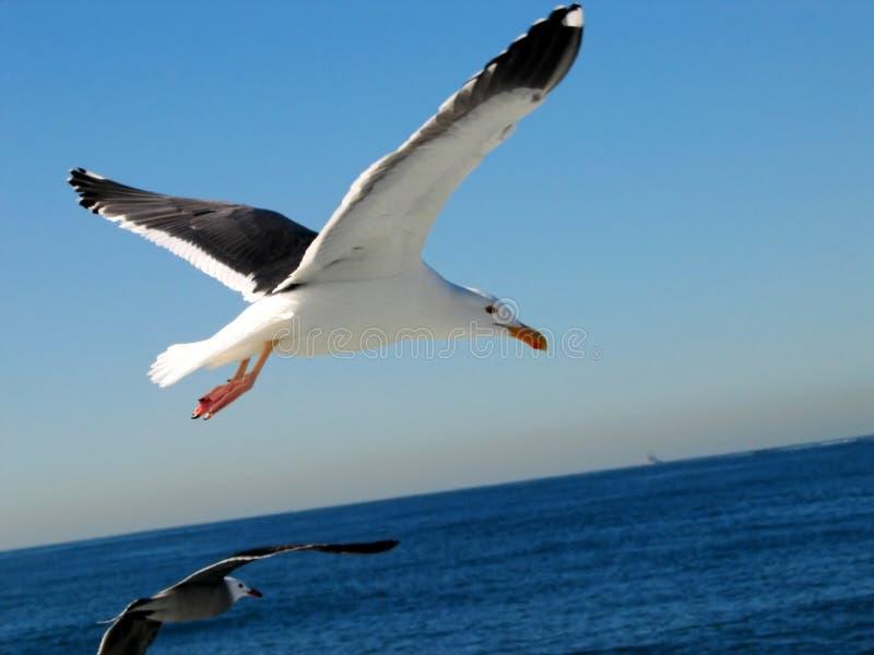 Download чайка 4 стоковое изображение. изображение насчитывающей перо - 492559