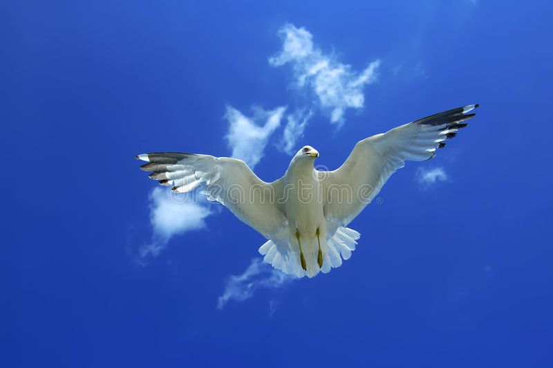 чайка underneath стоковое фото rf