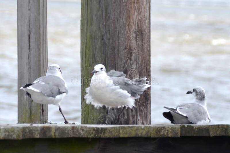 Чайки в ветре стоковое фото