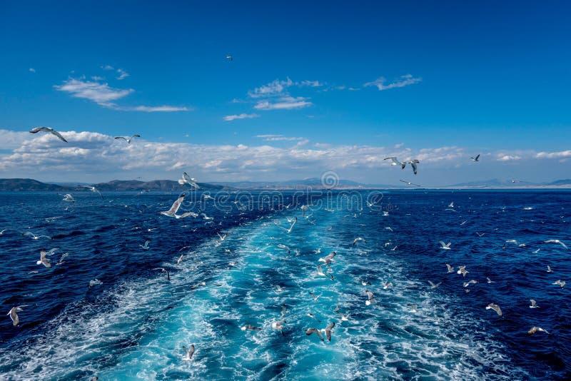 Чайки в среднеземноморском стоковое фото rf