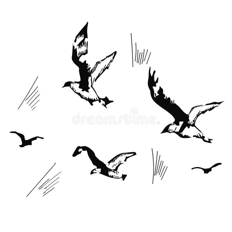 Чайки летания, нарисованная рука, иллюстрация вектора иллюстрация вектора