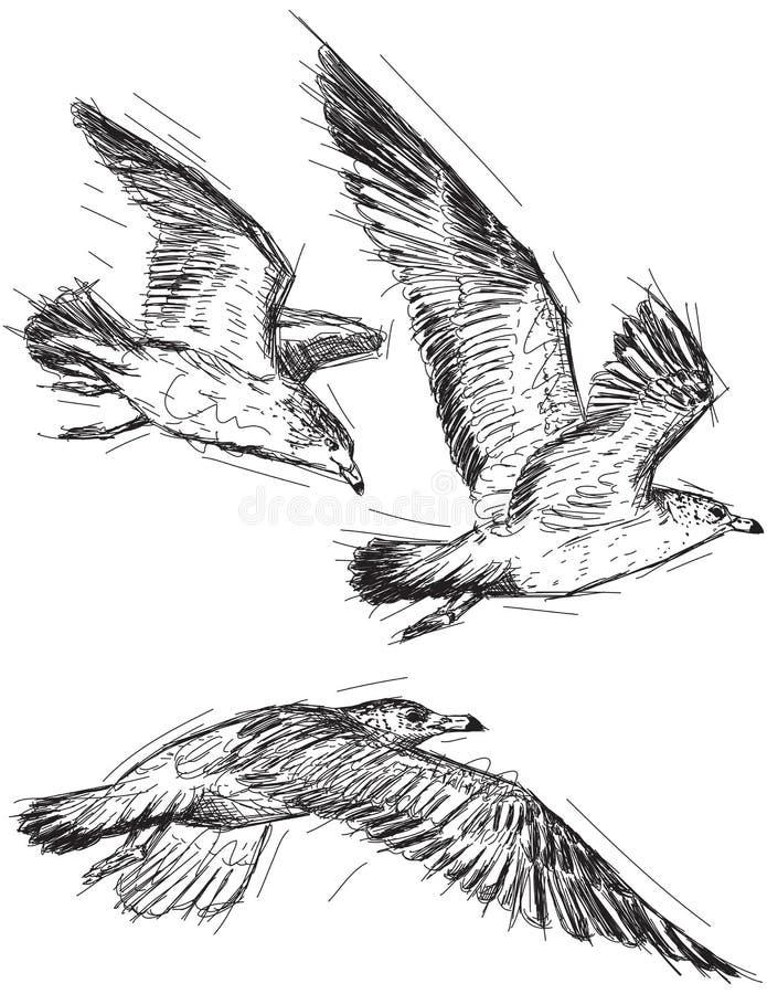 Чайки летания иллюстрация вектора