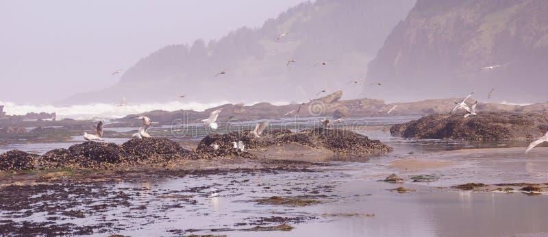 Чайки летая вне над входящим прибоем стоковые фотографии rf