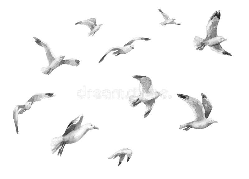 Чайки летания акварели иллюстрация штока