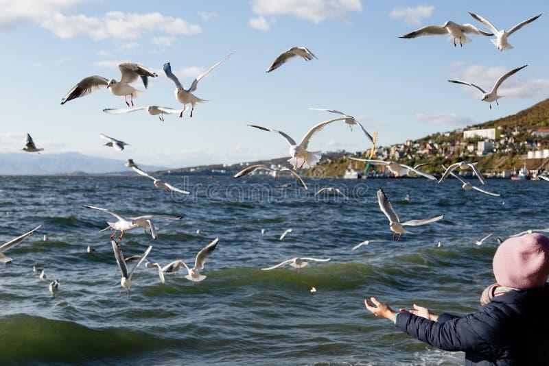 Чайки летая в небо иллюстрация штока