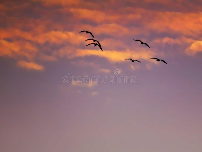 Чайки летая в оранжевые облака захода солнца стоковое изображение