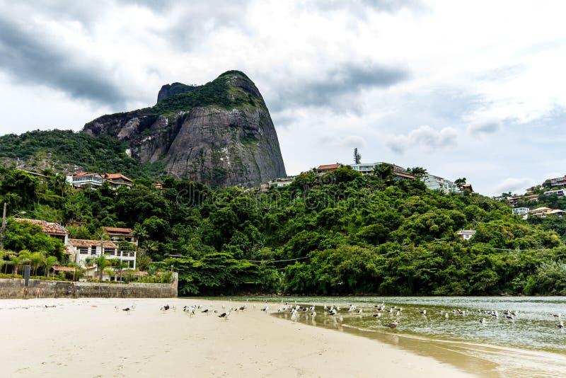 чайки летая под мостом в пункте где море встречает лагуну Marapendi, в Barra da Tijuca, Рио-де-Жанейро стоковое изображение rf