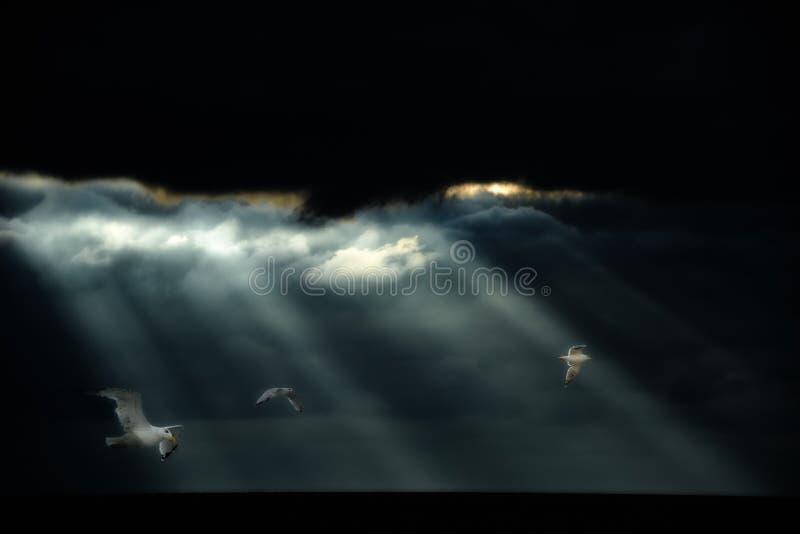 Чайки летая после тяжелого ливня над океаном Некоторые солнечные лучи приходя через облака и облегчают чайок