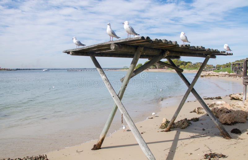 Чайки моря на деревянном укрытии стоковые изображения rf