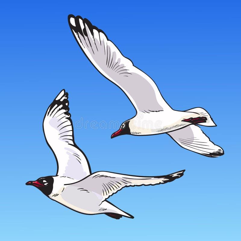 2 чайки мультфильма на голубой предпосылке Эскиз чайок летая в небе Нарисованная рукой иллюстрация вектора иллюстрация штока