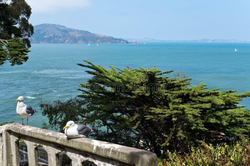 Чайки на балюстраде на Alcatraz стоковые фотографии rf