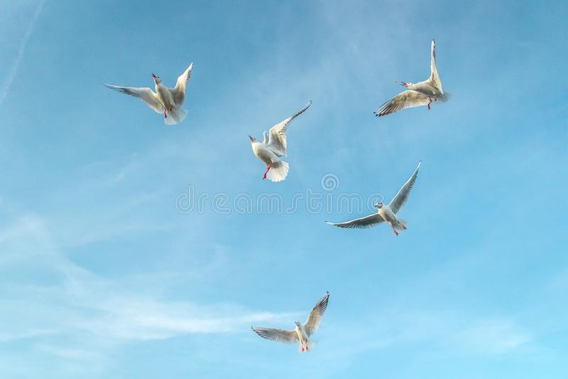 Чайки на море стоковое изображение rf